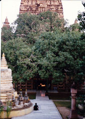bodhi tree in 1993